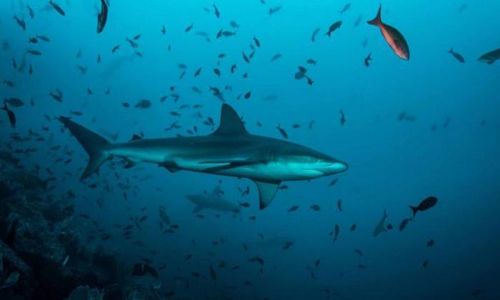 Aplausos y dudas por prohibición de pesca de tiburones