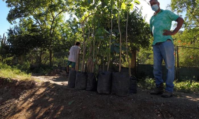 En dos meses han sembrado 8.111 mil árboles en Santa Marta
