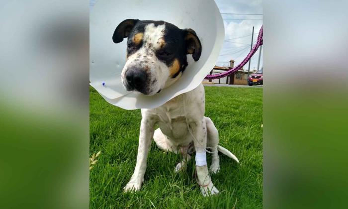 Condenan a hombre que dejó ciego a un perro tras dispararle balines