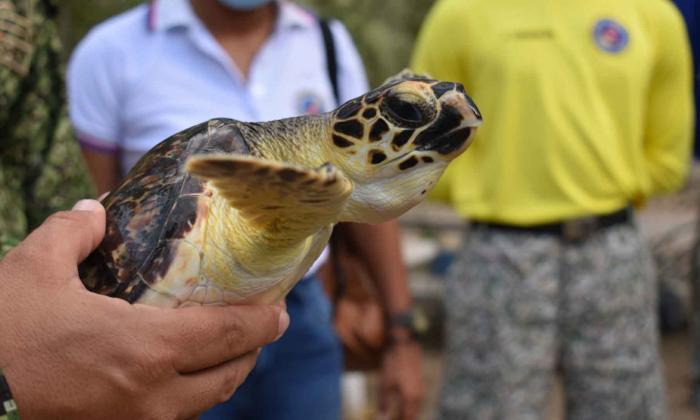 Pescadores y militares preservan la tortuga marina en Coveñas