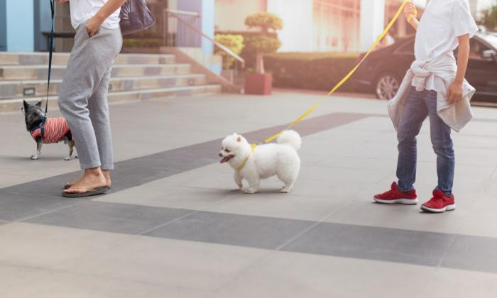 El ABC de la sana convivencia con mascotas en los edificios