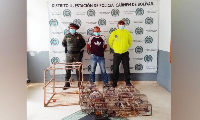 Capturan a hombre en Bolívar con 50 aves silvestres