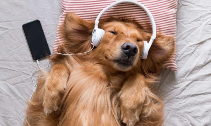 Spotify presenta una 'playlist' especial para los perros