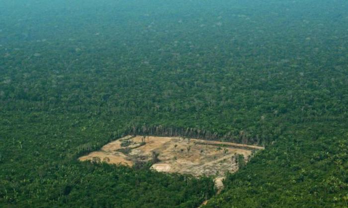 Bosques y Biden