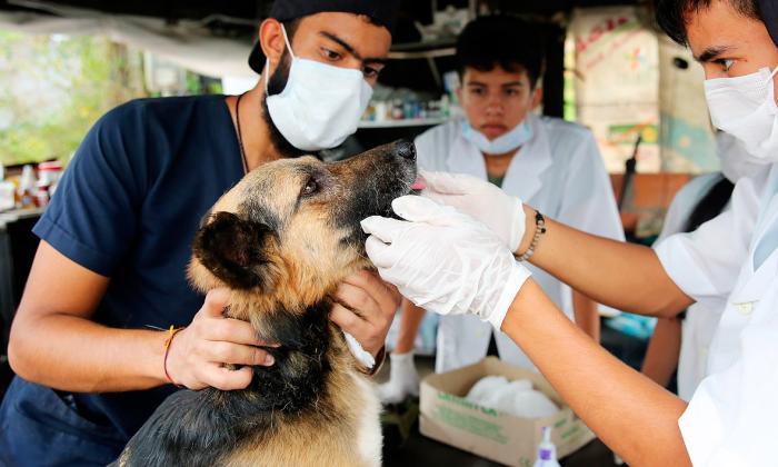 En imágenes   Las mascotas, la otra cara de la tragedia en Mocoa