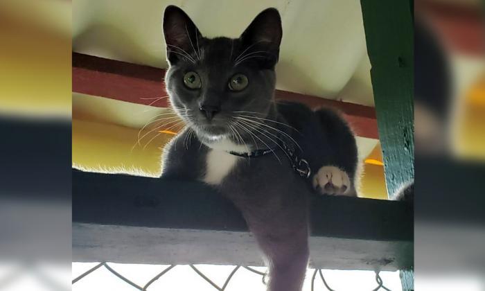 Mascotas Wasapea   Se extravió 'Django' en Villa Santos