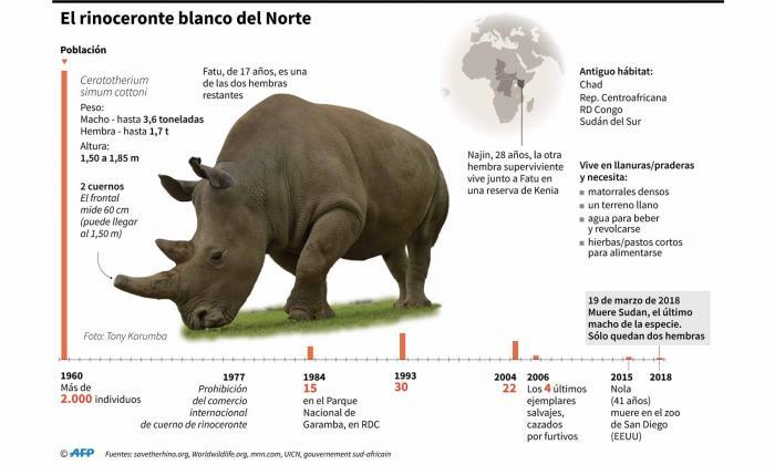Estas son las características del rinoceronte blanco del Norte