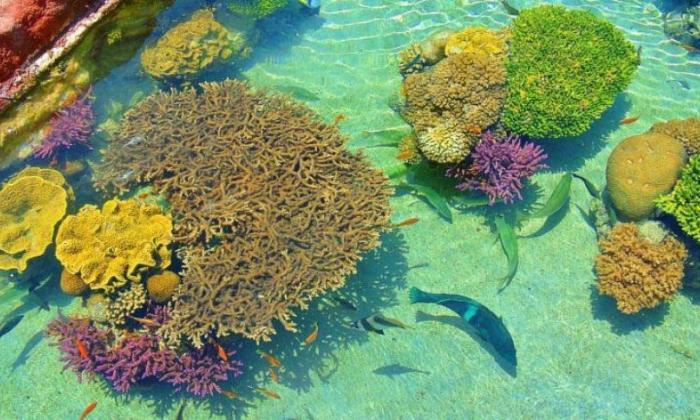 Corales por Colombia, corales por la vida