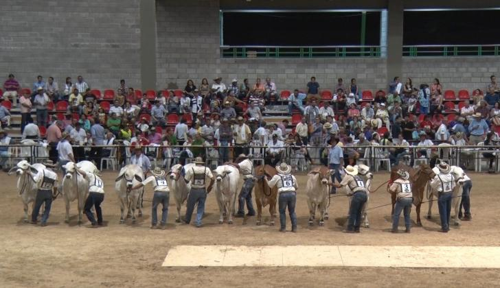 En el gran certamen pecuario vallenato habrá juzgamientos Brahman, Gyr y de ejemplares Doble Propósito.