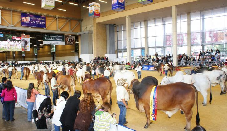 La Feria Nacional Cebú mostrará sobre la pista, correales remates y concursos lecheros, el resultado de más de 70 años de trabajo mejorando las razas.