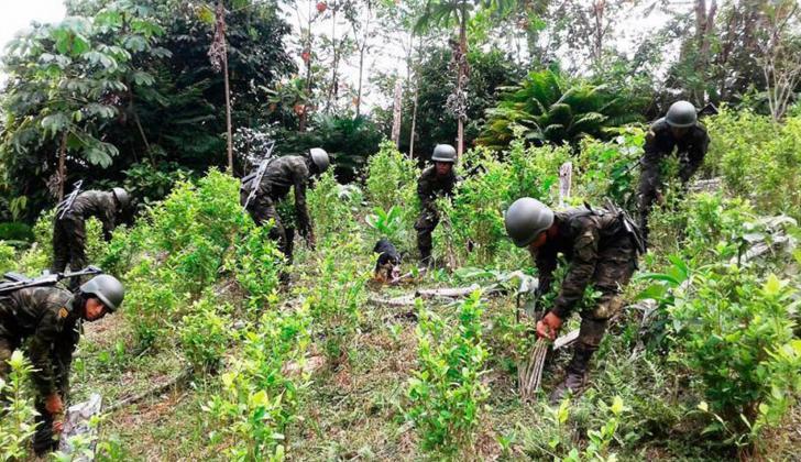 Hombres del Ejército erradican plantas de coca en una zona del país.