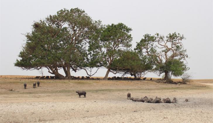 La trágica situación que ha traído como consecuencia la muerte por deshidratación de miles de animales de varias especies silvestres.