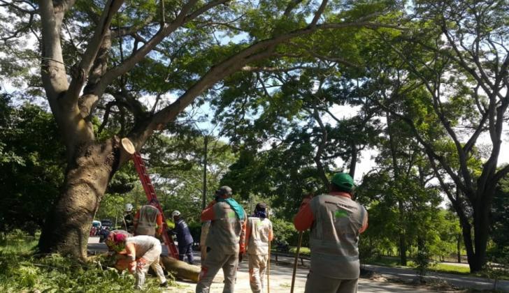 La labor se concentra en  en el barrio Mocarí.