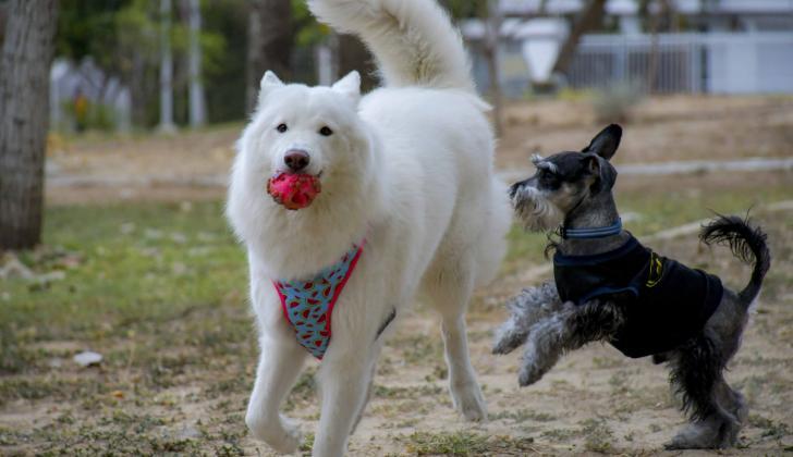 El juego y la socialización con otros perros reduce el estrés y la ansiedad.