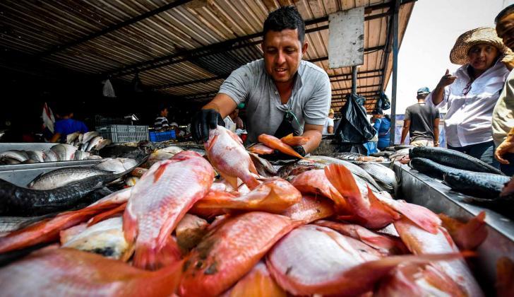 Puesto de venta de mojarra roja en el mercado del pescado ubicado en el centro de Barranquilla.