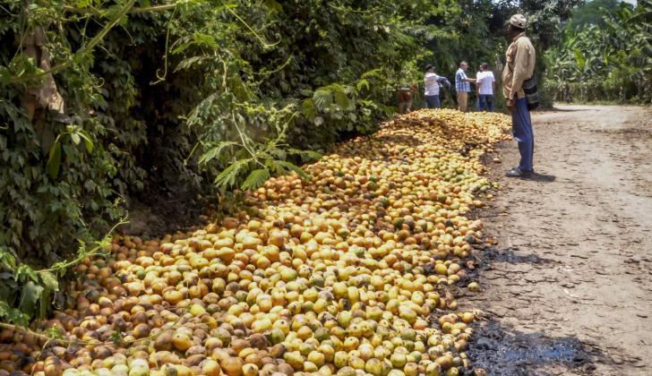 Mango sevillano