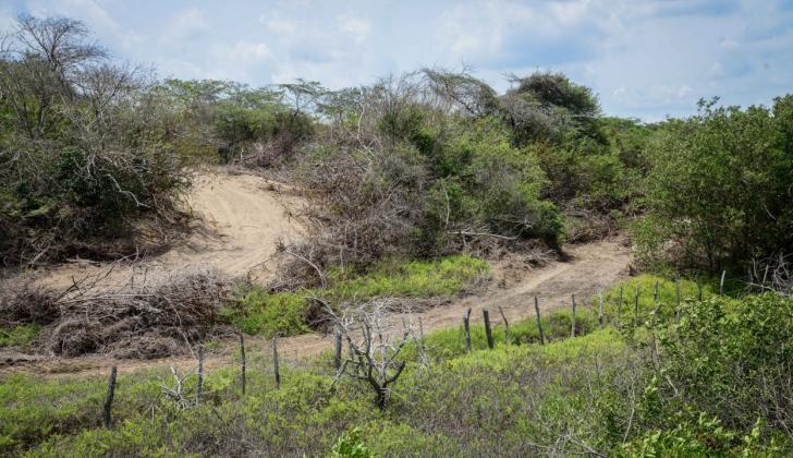 Zona del bosque seco tropical que está siendo intervenido en Puerto Colombia.
