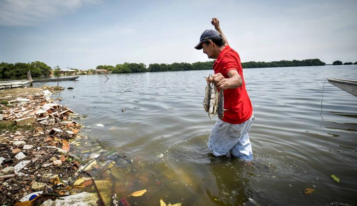 José Echeverría retira peces muertos de la ciénaga.