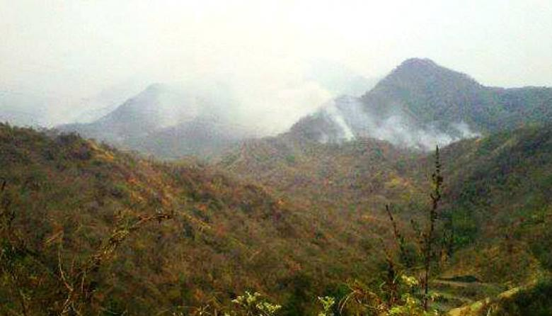 El fuego arrasa 30 hectáreas de café en la Sierra Nevada