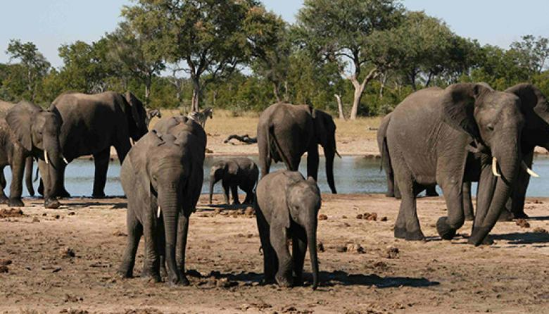 Elefantes en Hwange.
