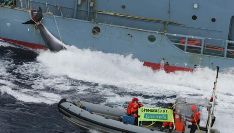 """Japón planea cazar 333 ballenas para """"investigación científica"""" sobre los cetáceos"""