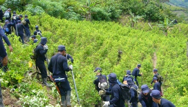 El cultivo ilícito de coca, la mayor amenaza para paz en Colombia, según ONU
