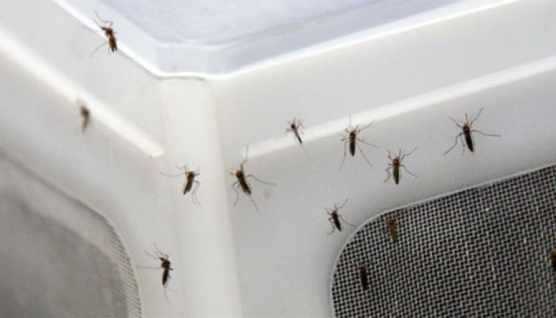 Virus del Zika cierra con 4.517 casos en Barranquilla, dice INS