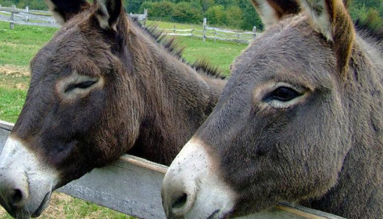 ICA endurece la normativa para exportar piel de burros