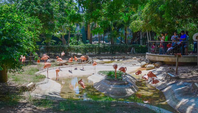 Un grupo de jóvenes toman fotos a la veintena de flamencos que reposan en uno de los hábitats del Zoológico de Barranquilla, en el barrio La Concepción. Para reproducirse requieren vivir en grupos grandes, de al menos 50 individuos, del que hoy no gozan por falta de espacio.