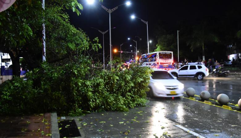 Un árbol caído en la carrera 54 con calle 53, causó traumatismos en la vía.