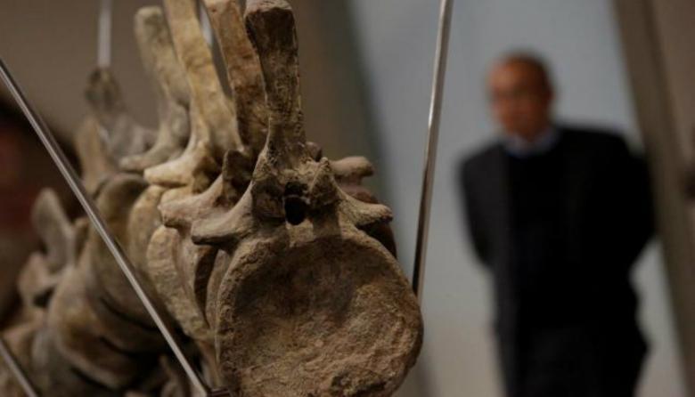 Marruecos investiga la venta de una cola de dinosaurio en México