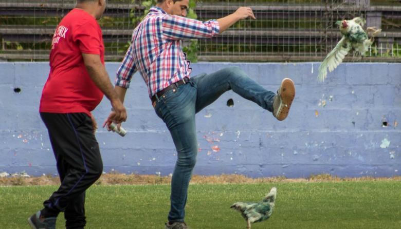 Gastón Alegari, gerente de Fénix, le propina un zurdazo a una de las gallinas.