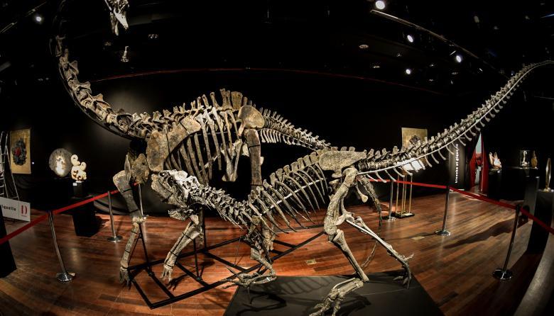 Venden dos esqueletos de dinosaurios en más de 1,4 millones de euros cada uno