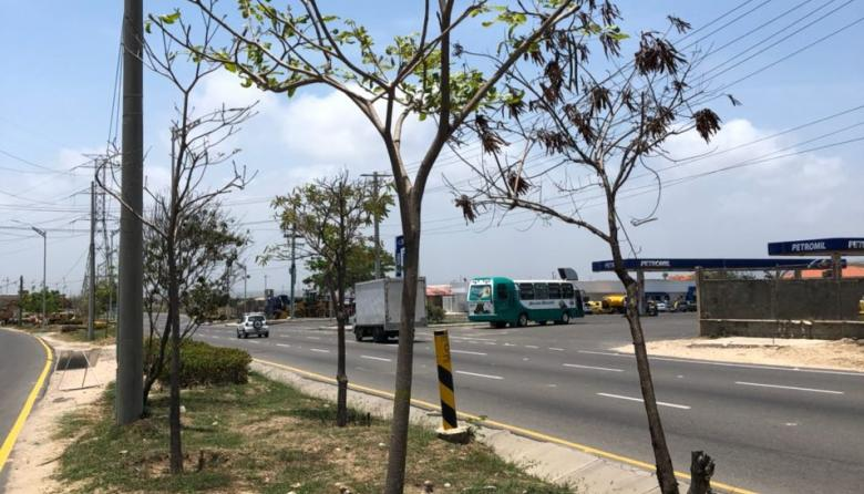 Epsa sembrará 300 árboles en Barranquilla
