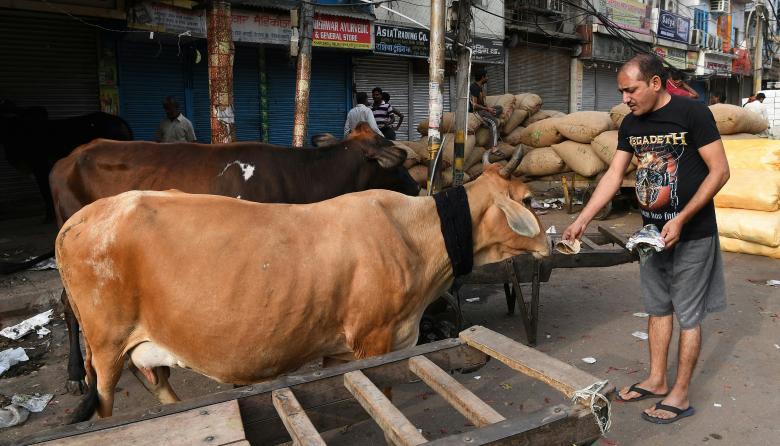 Matan a golpes en India a musulmán sospechoso de matar una vaca