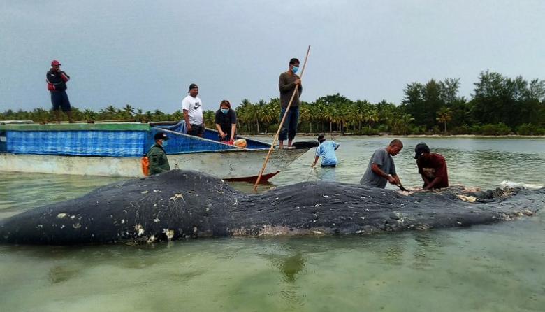 Así va la 'guerra' para salvar a los océanos del plástico