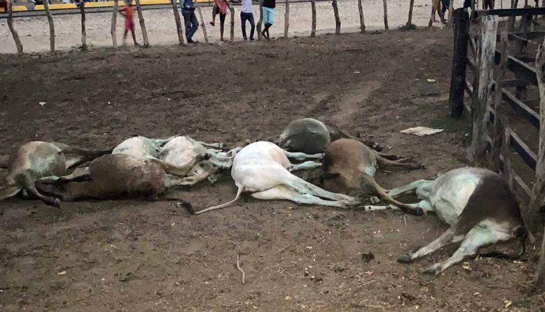 Al menos 40 animales en Sabanalarga mueren de manera extraña