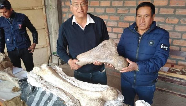 Hallan fósiles de tres elefantes de unos 10.000 años de antigüedad en Perú