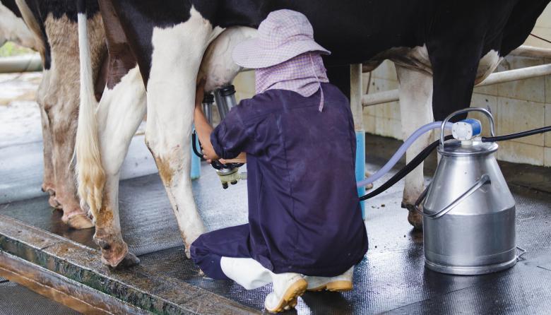 Conpes Lácteo aportará $1.500 millones al sector