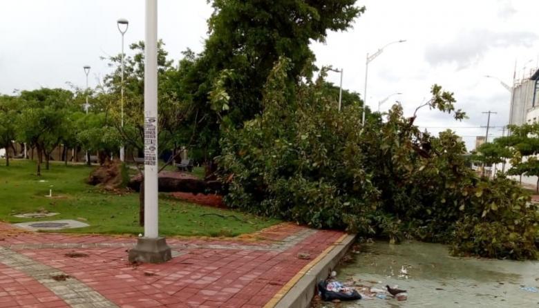 Reportan caída de árboles tras lluvia de este martes