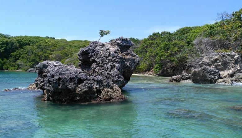 """Durante cuarentena, la fauna """"se pasea"""" por los Parques Naturales del Caribe"""