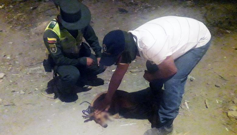 El Grupo de Protección Ambiental y Ecológica del Distrito atendió el caso de agresión contra la mascota.