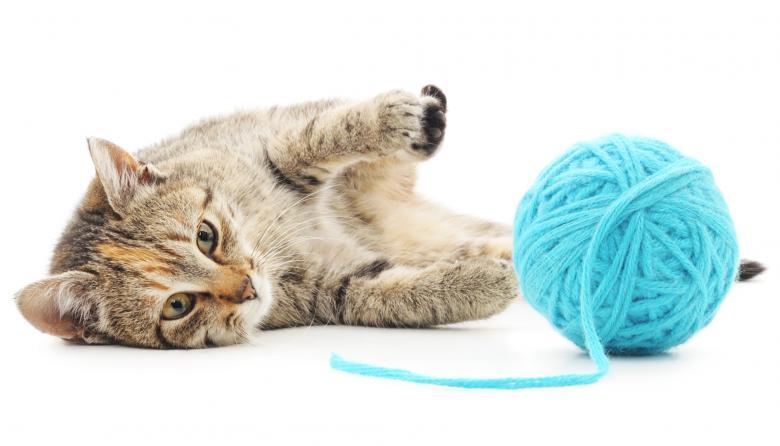 Mascotas | Los gatos y sus manías