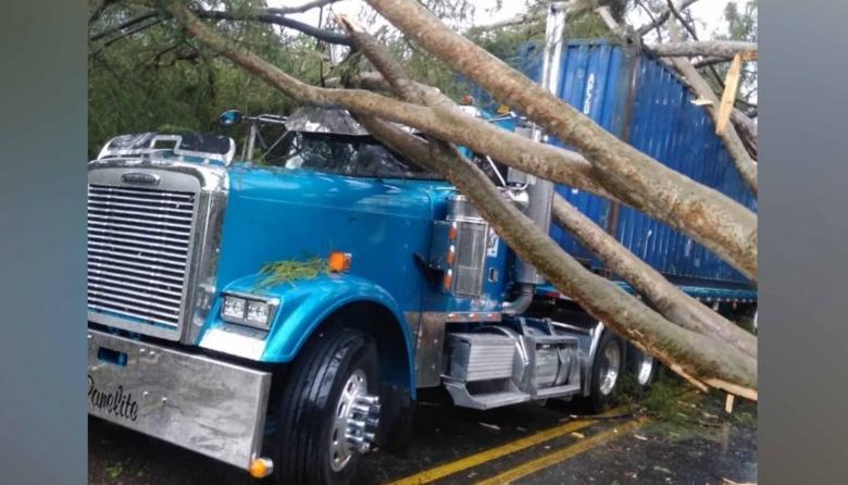 Las ramas destrozaron el vidrio panorámico del pesado vehículo.