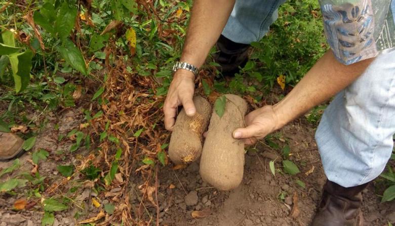 Estrategia para reactivar el sector agrícola