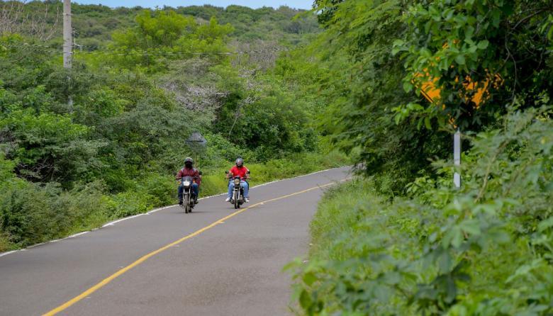 En video | La maleza 'desaparece' señales de tránsito en vías del Atlántico