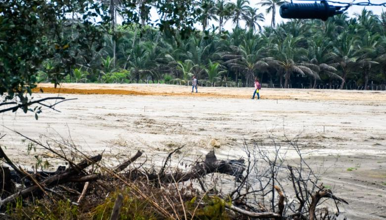 Denuncian intervención de manglar en Sabanilla