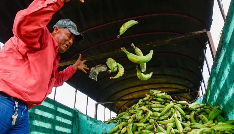 Un distribuidor arroja plátanos a un cargamento de esta preciada cosecha en el mercado de Barranquilla.