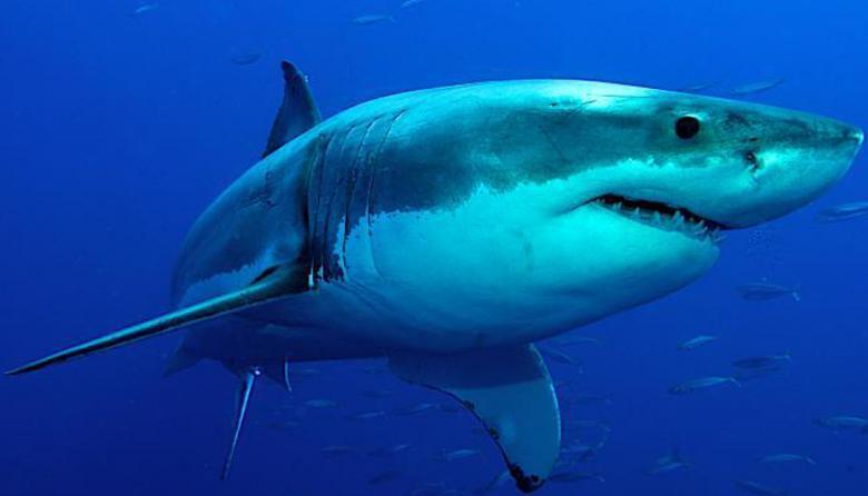 Gobierno prohíbe la pesca artesanal e industrial de tiburón en Colombia