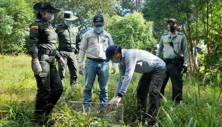 Liberan especies en reserva natural de Córdoba